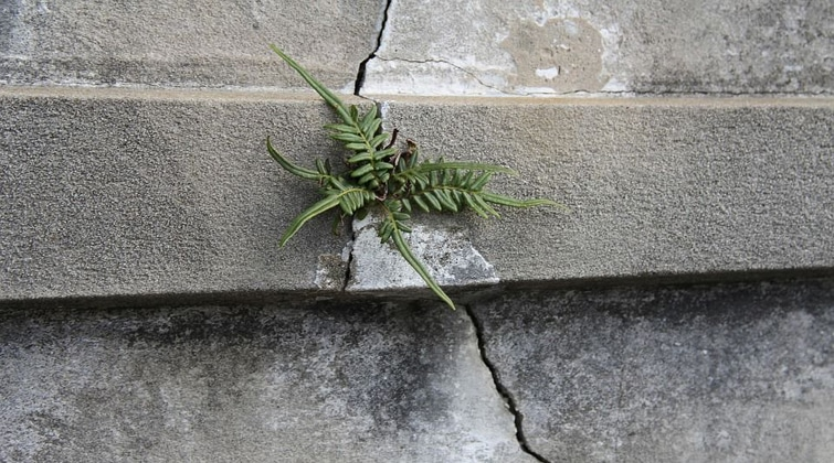 Step on a crack …. Break your realtors deal